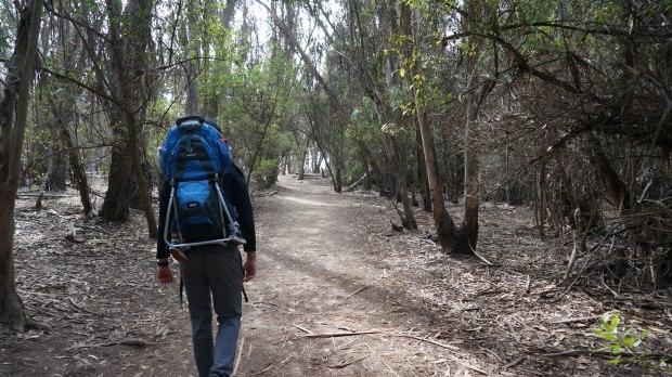 hike // Goleta Butterfly Grove