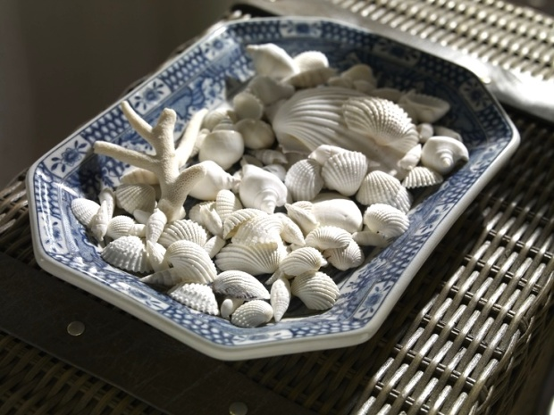 seashells in blue and white plate