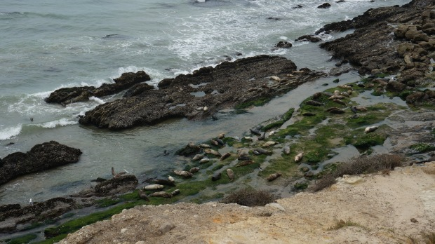 seals // carpinteria