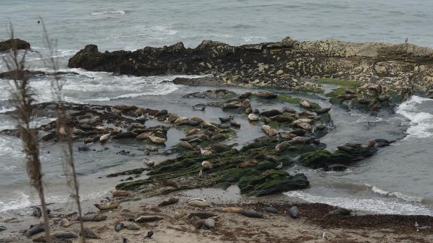 carpinteria seal sanctuary